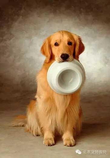 表情 狗狗种类名字与图片宠物狗狗的常见品种及图片 海南生活资讯网 表情
